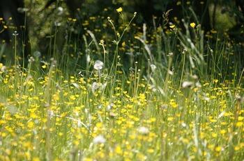 meadow-123280_640.jpg